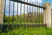 Old jewish cemetery with jewish star — Stock Photo