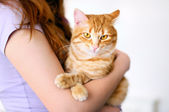 Tomcat holding naranja chica — Foto de Stock