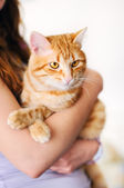 Girl holding orange tomcat — Stock fotografie
