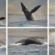 Whale photo sequence - Stock Photo