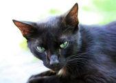 Gato preto — Fotografia Stock