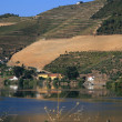 View on vineyards in Portugal — Stock Photo