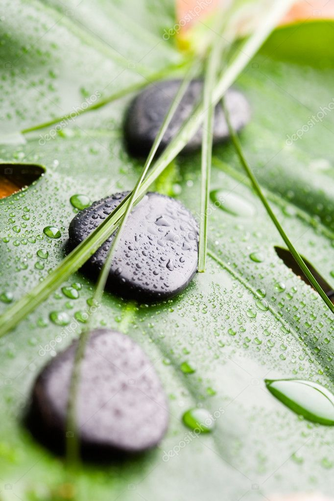 Black stones on green leaf with water drops — Stock Photo #6076996