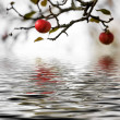 Stockfoto: Apple tree