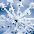 Stock Photo: Frozen flower