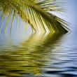 Palms sun and sea illustration — Stock Photo