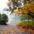 Autumn — Stock Photo #6085722