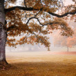 Autumn — Stock Photo #6085728