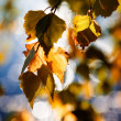 Autumn — Stock Photo #6085754