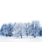 Frosty trees — Stock Photo