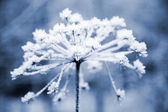 Frozen flower — Stock fotografie