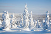 Lapland Finland — Stock Photo