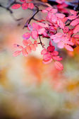 Rose in autumn — Stock Photo