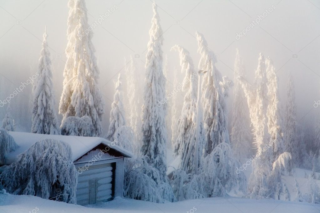 Winter scene with forest covered with thick snow — Stock Photo #6085481