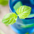 Fresh mint — Stock Photo #6109966