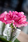 Close up of pink dianthus in easter eggholder — Stock Photo