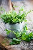 Erwt sprout — Stockfoto