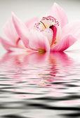 粉色兰花 — 图库照片