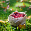Bunch of cranberries — Stock Photo