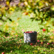 Apples in bucket — Stock Photo