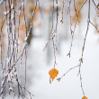 Snowing in autumn — Stock Photo