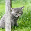 Kitten — Stock Photo #6286341