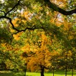 Autumn trees - Stock Photo
