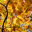 Autumn colours — Stockfoto