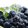 Stock Photo: Blueberries with sugar