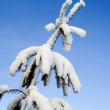 Stock Photo: Heavy snow