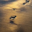 Footprints — Stock Photo #6287203