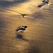 Footprints — Stock Photo