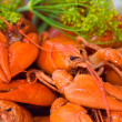 crayfish — Stock Photo #6287488
