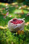 Bunch of cranberries — Stock Photo