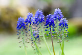 Blue flower — Stock Photo