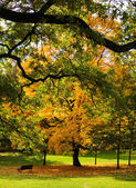 Autumn drzewa — Zdjęcie stockowe