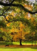 Sonbahar ağaçlar — Stok fotoğraf