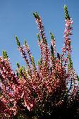 Autumn plant — Stock Photo