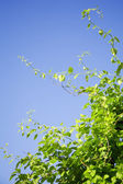 Green branches — Stock Photo