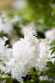 White beautiful flower — Foto Stock