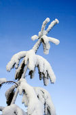 Heavy snow — Stock Photo