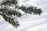 Heavy snow — Stock Photo