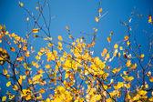 Colorful autumn — Stock Photo