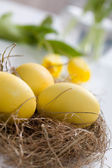 Yellow easter eggs — Stock Photo