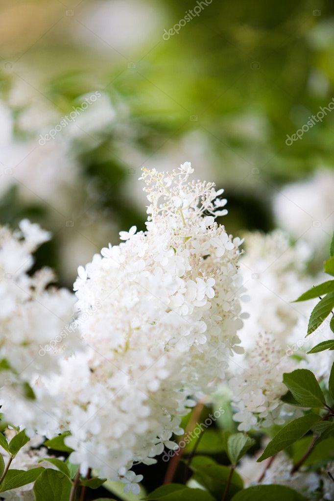 Close up of beautiful white flower — Stock Photo #6286822