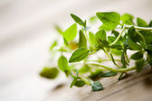 Fresh thyme — Stock Photo