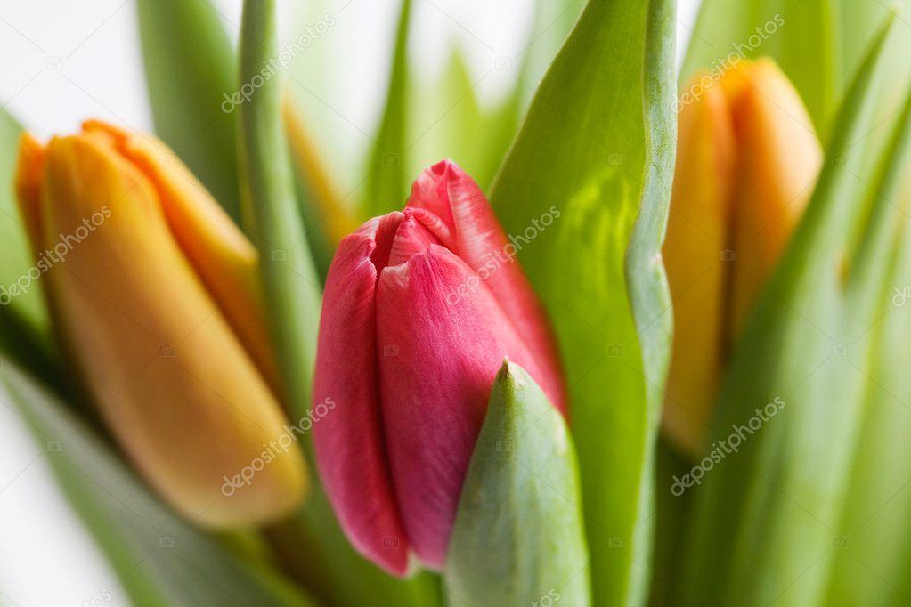 Как в домашних условиях сохранить тюльпаны в домашних условиях срезанные