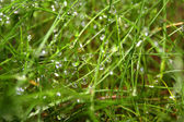 Wet grass — Stock Photo