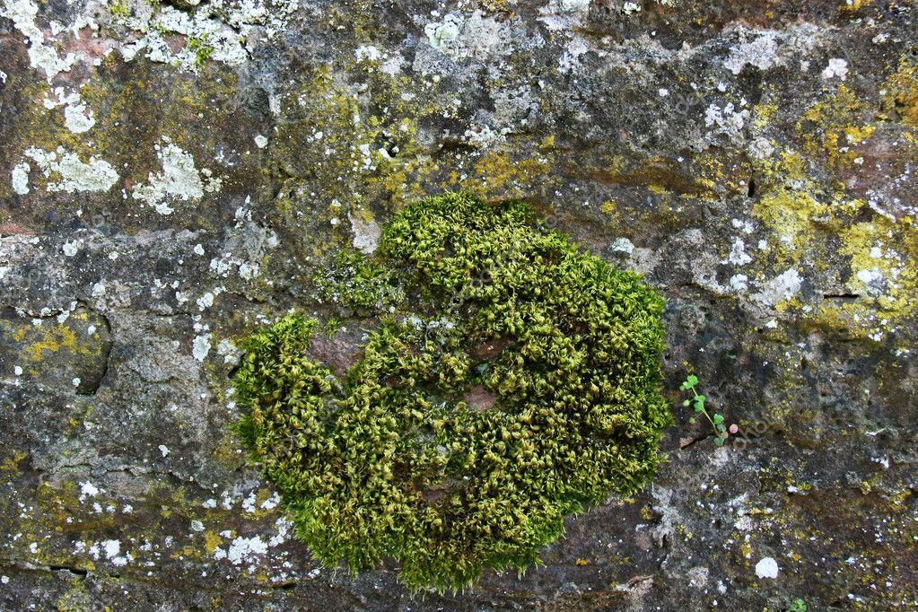 Weathered wall with moss growing — Stock Photo #6431174
