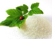 Sugar, twig and ladybug isolated — Stock Photo